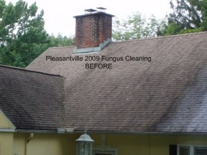 Pleasantville 2009 Fungus Cleaning BEFORE