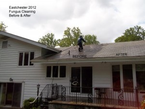 Eastchester 2012 Fungus Cleaning Before & After